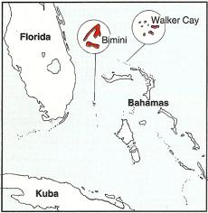 Blauflossen-Thun, einer der größten Big-Game-Fische