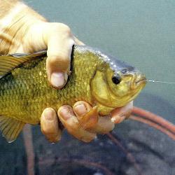 Angler Bob Nudd