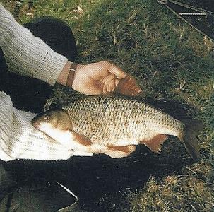 Am Fluss Stour in England