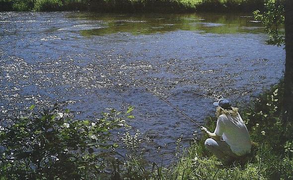 Angeln an der Zschopau in Sachsen, ein fischreiches Fließgewässer