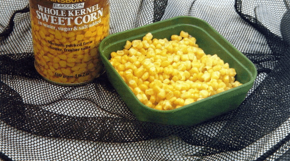 Angeln mit Mais
