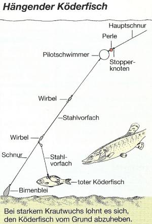 Angeln mit totem Köderfisch