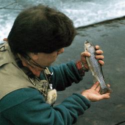 Fliegenfischer Angler Chris Lee auf Äschenfang am River Wye