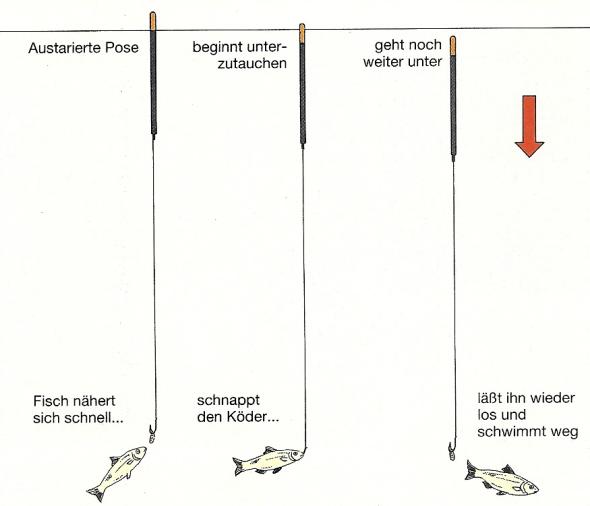 Beim Posenfischen Bisse erkennen und richtig deuten
