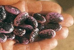 Bohnen und Erbsen als Angelköder