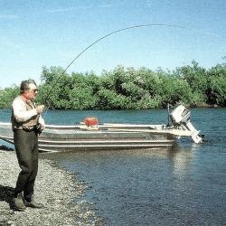 Chinook, Lachs, Königslachs, Kanektok River in Alaska Angeln