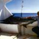 Der Marlin ein gigantischer Raubfisch, es gibt neun verschiedene Arten