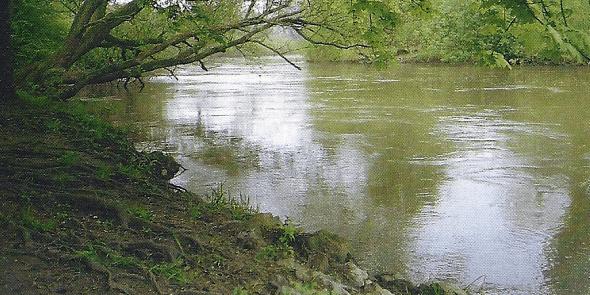 Die Leine bei Hannover hat zu einem fischreichen Fluß entwickelt