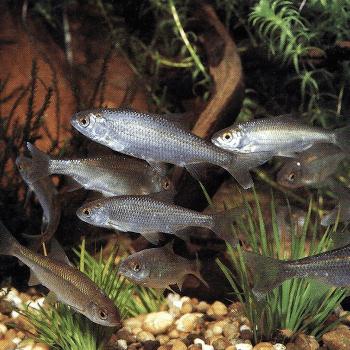 Die Sinne des Fisches, wie nehmen Fische ihre Umwelt wahr