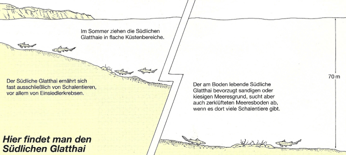 Glatthai, der Nördliche und Südliche, Unterscheidungsmerkmale, Vorkommen