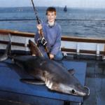 Der Heringshai Groß, kräftig und schnell, eine echte Herausforderung