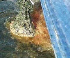 Heringshai