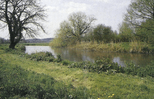 Karpfenangeln an Flüssen, viele Flüsse beherbergen herrliche Karpfen