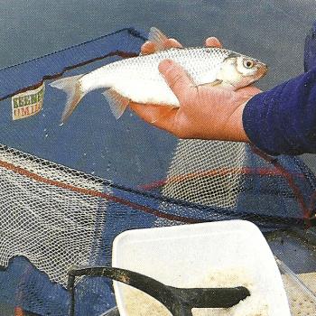 Matchangler Keith Arthur am Grand-Union-Kanal in London