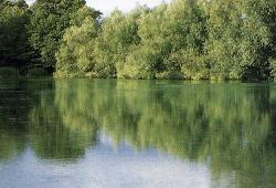 Redmire Pool, ein kleiner See (etwa 1,2 ha) in England