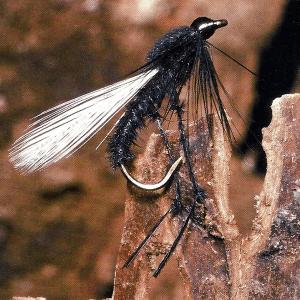 Terrestrials sind eine Trockenfliegenart zum Angeln