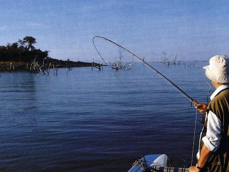 Tigerfisch