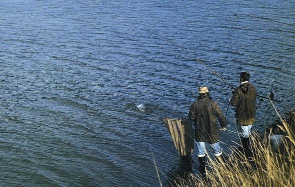 Zander Angeln, im trüben Wasser dem Zander auf der Spur