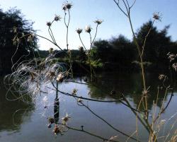 Angler Image
