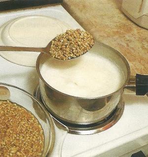 Weizen war schon immer ein guter Rotaugenköder, doch kann man damit auch Karpfen, Rotfedern, Brassen und Döbel fangen.