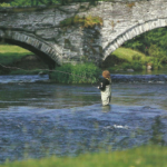 Nymphenfischen am Fluss
