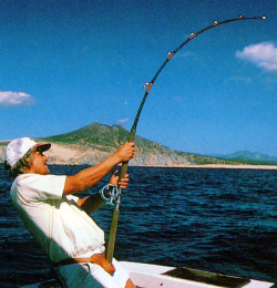 Der Marlin