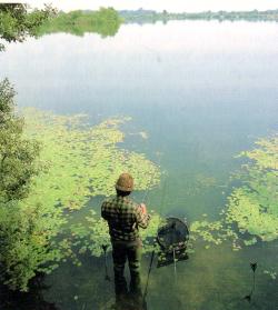 Fische in Kiesgruben
